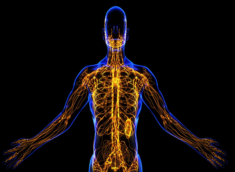 Help The Lymphatic System